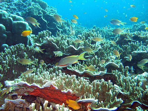 coral reef at Moalboal