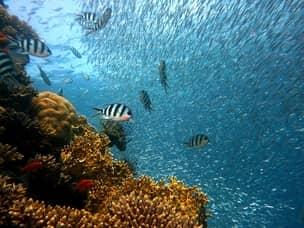 Fish in Boracay